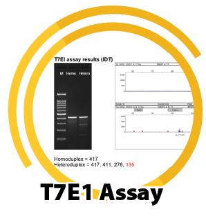 T7E1 Assay